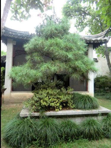 chana5_suzhou1